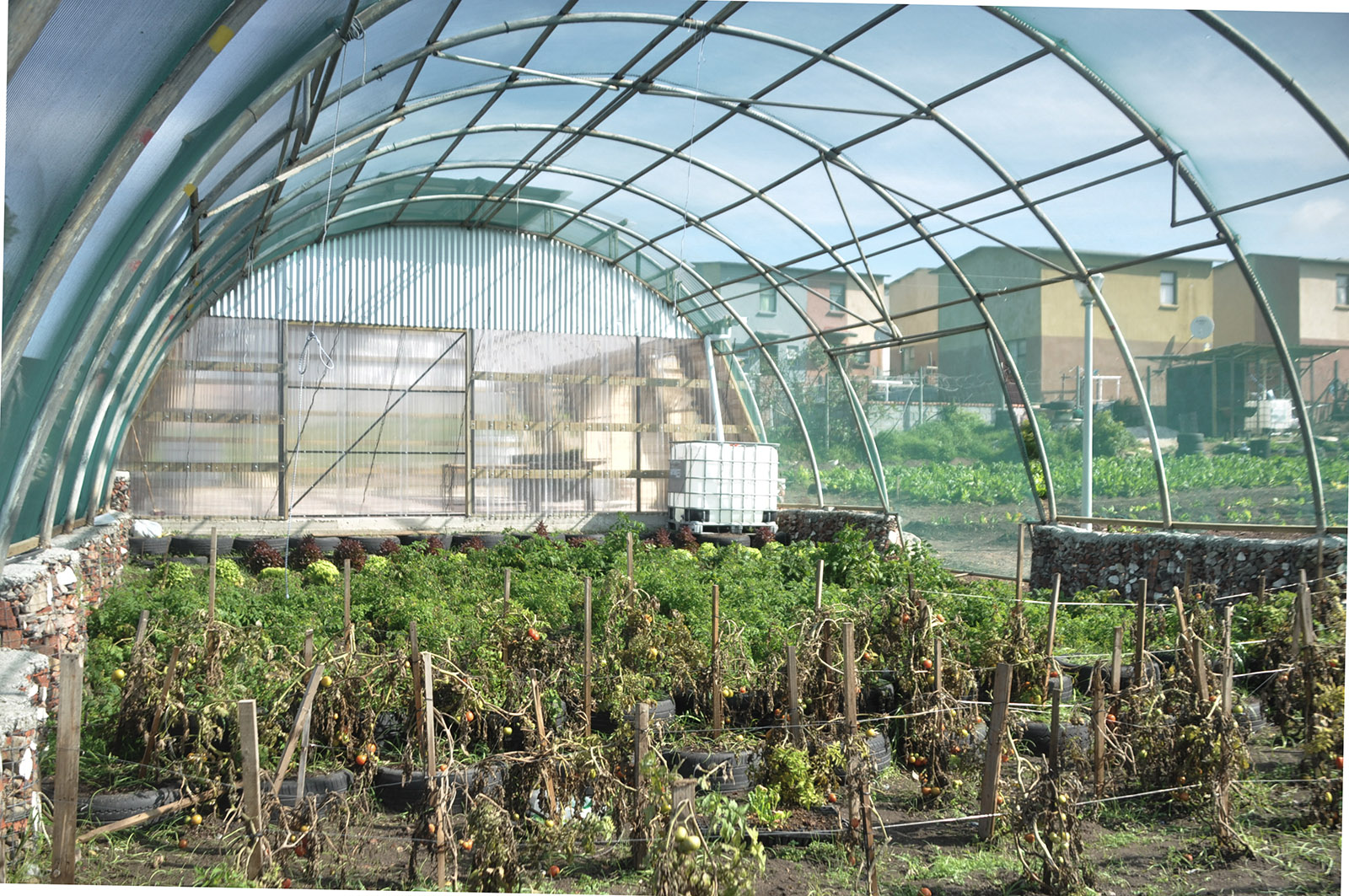 The plant nursery of the Lim'uphile Co-op by Collectif Saga is a transparent semi-cylindrical structure, similar to a plasticulture tent