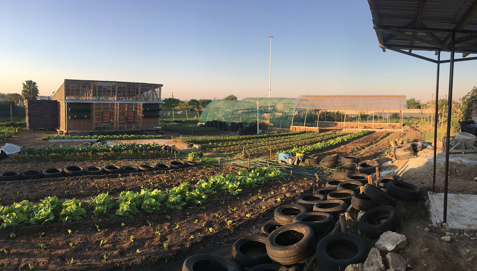 Lim'uphile Co-op stands behind rows of planted vegetables and rubber tires