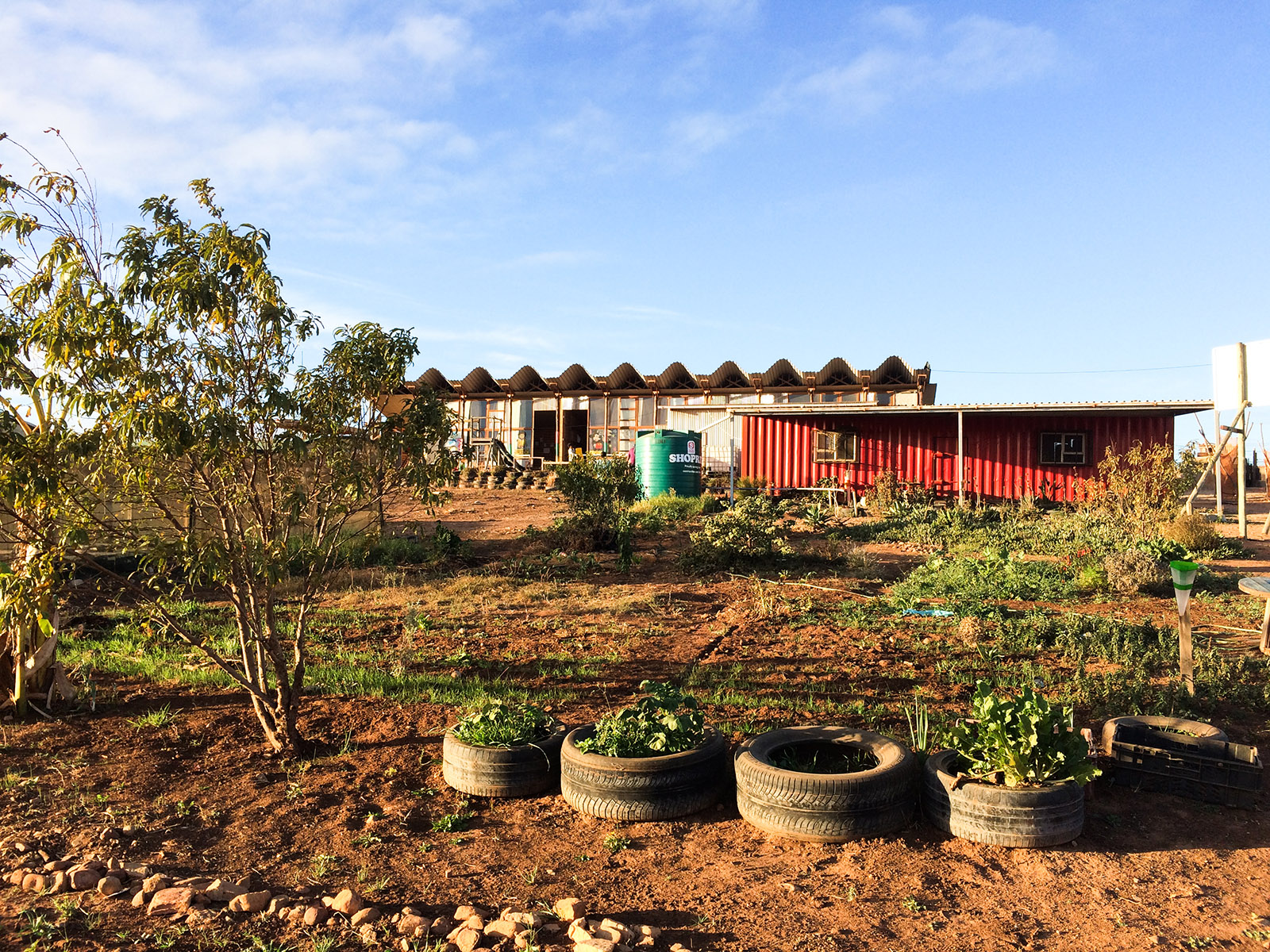 A low building with a wavy corrugated steel roof stands at a distance with a tree and rubber tyres filled with plants in the foreground